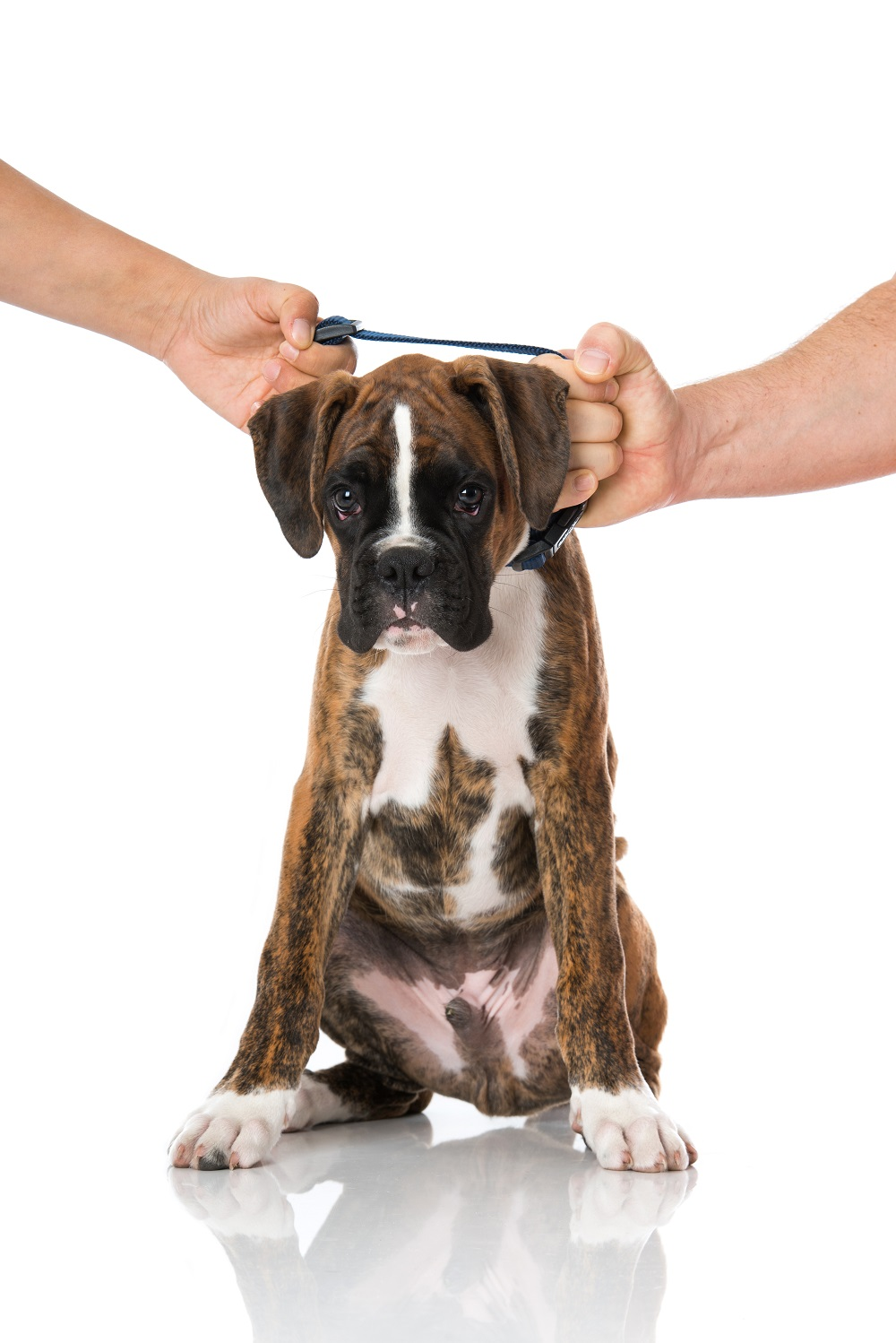 Pets and Divorce Law in Arizona
